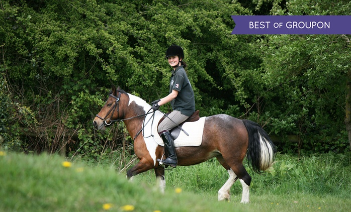 Trent Park Equestrian Centre: Intensive Four-Day Horse Riding Course for £199 (59% Off)