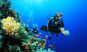 Tauchschule Devil Divers: Schnuppertauchen od. PADI OWD Crashkurs inkl. Ausrüstung in der Tauchschule Devil Divers ab 19,50 € (bis zu 80% sparen*)