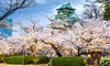 ✈ 9-Day Tour of Tokyo & Kyoto with Airfare