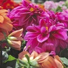 37% Off Plants and Gardening Supplies
