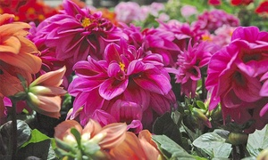 Garden World: $19 for $30 Worth of Plants and Gardening Supplies at Garden World