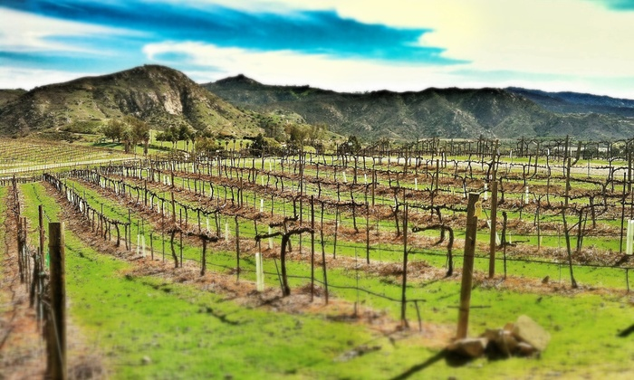 Orfila Vineyards & Winery - Escondido: Wine Flights for Two or Four at Orfila Vineyards & Winery (38% Off)