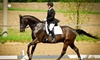 Fire Fly Stables - Kitchener: Four Beginners' Horseback-Riding Lessons for One or Two at Fire Fly Stables (Up to 58% Off)