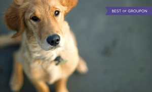 Online Academies: Animal Psychology Online Course with Online Academies (86% Off)