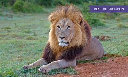 Admission to the Oakland Zoo for a Child, Adult, or Family (Up to 32% Off)