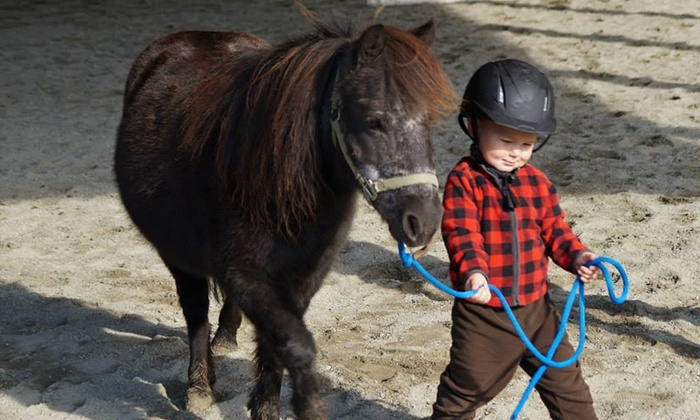 Hylee Training - Mission: Pony Ride for One or Two Children, or Birthday Party for Up to 10 Kids at Hylee Training (Up to 58% Off)