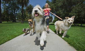 The Dog Walking Nanny, LLC: $49 for Five Half-Hour Dog Walks from The Dog Walking Nanny, LLC ($100)