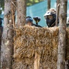 Up to 84% Off Paintball Adventure