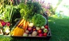 Fresh Fields Farm Boxes - Milton Keynes: One or Three Boxes of Mixed Fruit and Vegetables from Fresh Fields Farm Boxes (Up to 54% Off)