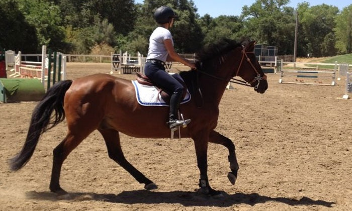 Nighthorse Farm - Elk Grove: One or Three 60-Minute Private Horseback-Riding Lessons at Nighthorse Farm (Up to 58% Off)