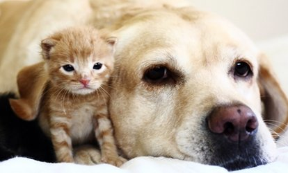 Physical Exam, Vaccination, or Wellness Package at Ashton Animal Hospital (Up to 50% Off). 3 Options Available.