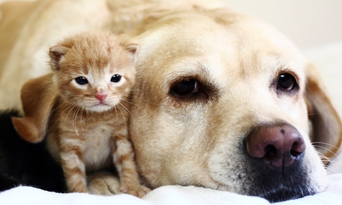 Ashton Animal Hospital - Downey: Physical Exam, Vaccination, or Wellness Package at Ashton Animal Hospital (Up to 50% Off). 3 Options Available.