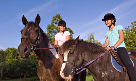 2 or 4  Horse-Riding Lessons, or 2 Lessons and Overnight Camp at Showtime Saddlebreds and Academy (Up to 58% Off)