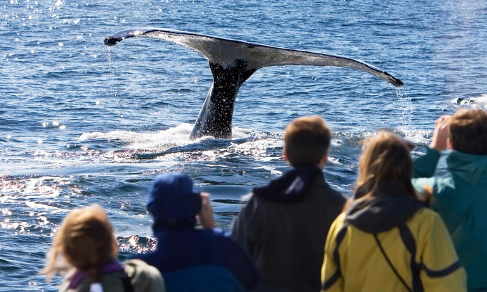 Capt John Whale Watching and Fishing Tours - Plymouth: $62 for a Whale-Watching Tour for Two from Capt John Whale Watching and Fishing Tours (Up to $104 Value)