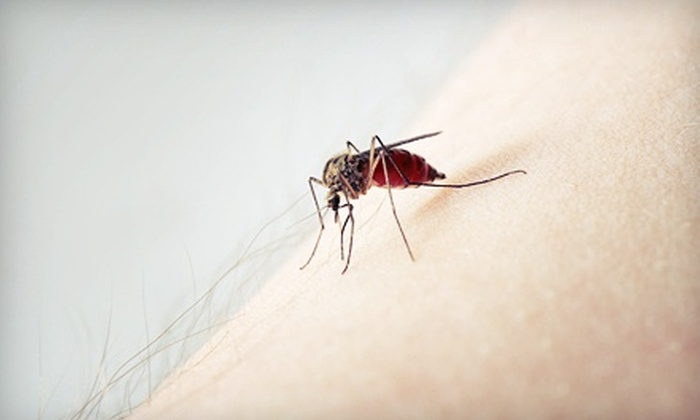 Mosquito Squad - Lake Murray: $69 for a Home Termite Inspection from Mosquito Squad of Columbia ($125 Value)
