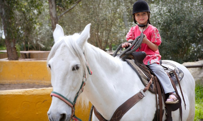 Cherokee Hill Farm - Columbus: Beginner's Horseback-Riding Lessons at Cherokee Hill Farm in Tryon (Up to 54% Off). Four Options Available.