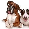 Up to 67% Off Dog Walks or Pet Sitting