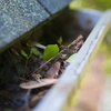55% Off a Roof and Gutter Cleaning with Moss Treatment
