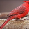 Half Off Backyard Bird-Feeding Supplies
