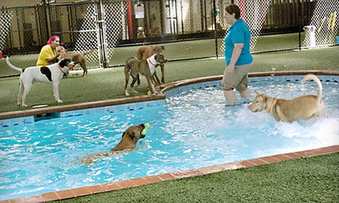 Pet Paradise - Old Kenner: Daycare or Boarding for Dogs or Cats at Pet Paradise in Kenner. Two Options Available.