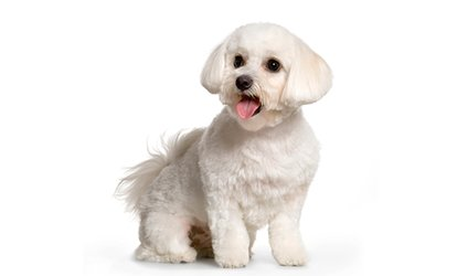 Dog <strong>Grooming</strong> Products from Doggie Diva (Up to 50% Off)
