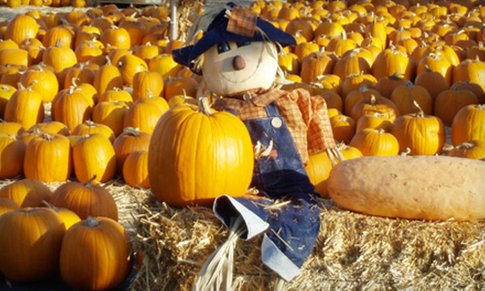 Shawn's Pumpkin Patch - Los Angeles: $10 for $20 Worth of Pumpkins at Shawn's Pumpkin Patch