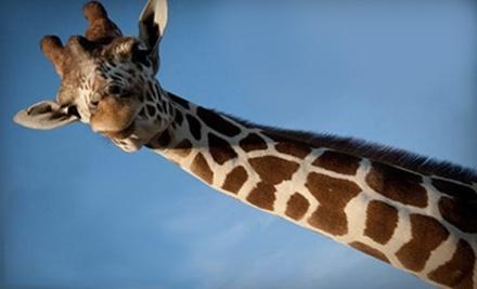 African Safari Wildlife Park - African Safari Wildlife Park in Port Clinton