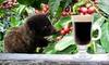 $10 for Rare Kopi Luwak Coffee at Jezalin's