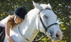 River Hollow Farm - Perrysburg: $25 for a Private English Horseback-Riding Lesson at River Hollow Farm in Perrysburg ($50 Value)