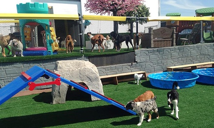Two Days of Doggie Daycare or Three Nights of Boarding at Canine Adventure Den Daycare (Up to 56% Off)