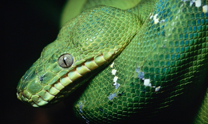 Repticon - Oklahoma State Fairground: Reptile and Exotic-Pet Show for Two Adults and Two Children at Repticon on October 5 or 6 (Up to $30 Value)