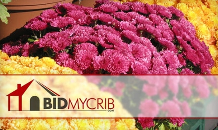 """BidMyCrib.com: $7 for One 8"""" Mum Pot Delivered to Your Home from BidMyCrib.com"""
