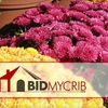 "DO NOT RUN - BidMyCrib.com: $7 for One 8"" Mum Pot Delivered to Your Home from BidMyCrib.com"
