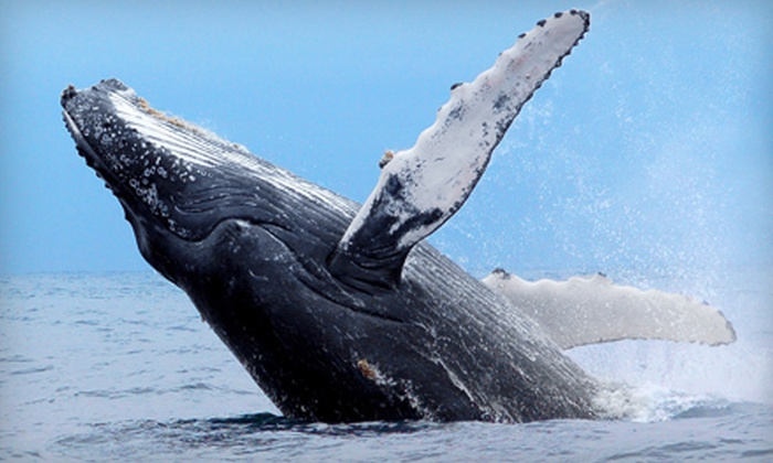 Cap'n Fish's - Boothbay: $19 for Three-Hour Whale-Watching Cruise from Cap'n Fish's in Boothbay Harbor (Up to $38 Value)