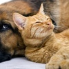 Up to 51% Off Delivery of Pet Meds and Food