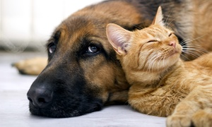 Country Ridge Animal Hospital: $75 for an Exam and Three Services for a Dog or Cat at Country Ridge Animal Hospital (Up to $156.71 Value)