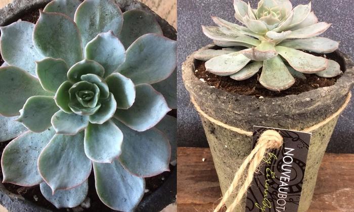 NOUVEAU BOTÁNICO - Cranston: $14 for $25 Worth of Plants — NouveauBotánico