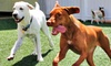 K9s Only - West Los Angeles: One or Two Nights of Dog Boarding at K9s Only (Up to 55% Off)