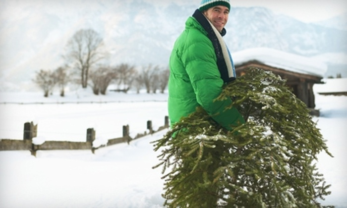 Five Star Holiday Decor: $59 for a Hand-Delivered Fraser Fir Christmas Tree from Five Star Holiday Decor ($159 Value)