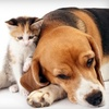 Westlake Animal Hospital - West Lake Hills: $20 New Patient Pet Exam at Westlake Animal Hospital ($48 Value)