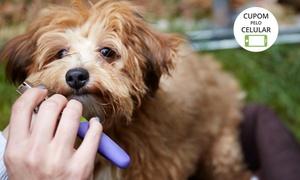 Armazém dos Bichos: Armazém dos Bichos – Sumarezinho: banho, tosa higiênica e hidratação para cães de pequeno, médio e grande portes