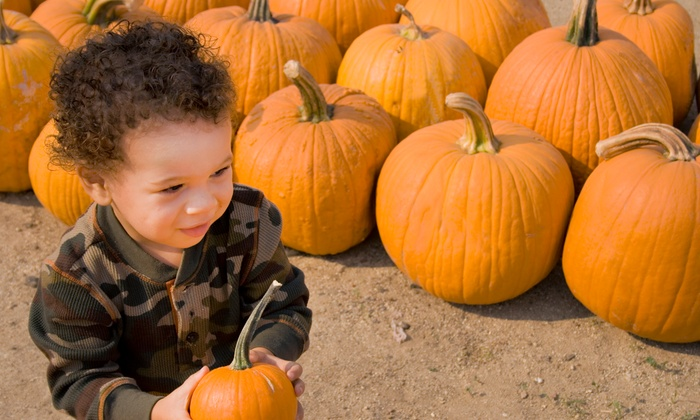 Mitcham Farm - Colonel Cob's Corn Maze & Pumpkin Patch at Mitcham Farm: Corn Maze and Pumpkin Patch Admission for Four, Six, or Eight at Mitcham Farm (Up to 53% Off)