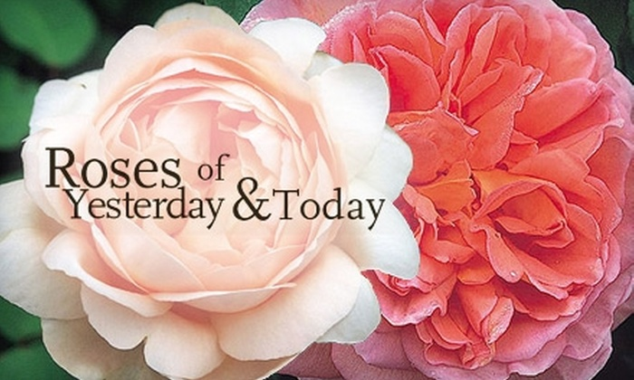 Roses of Yesterday and Today - Watsonville: $15 for $30 Worth of Potted or Bare Root Roses at Roses of Yesterday and Today Rose Garden