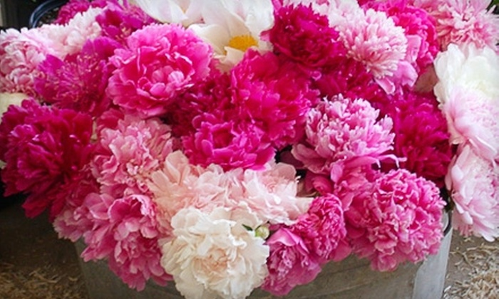 Gilbert H. Wild and Son: $10 for $20 Worth of Flowers and Bulbs from Gilbert H. Wild and Son