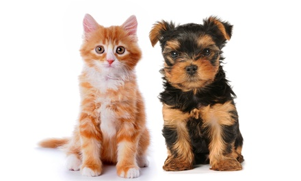 Cat or Dog Wellness Exam or Annual Pet Checkup with Vaccines at Kendall Drive Animal Hospital (Up to 78% Off)