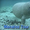 59% Off Manatee Tour and Dive