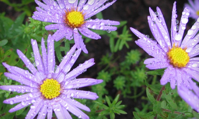 Scioto Gardens - Delaware: $20 for $40 Worth of Plants at Scioto Gardens in Delaware