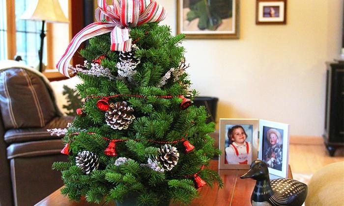 Fresh Tabletop Christmas Tree