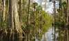 40% Off Everglades Adventure for One or Two