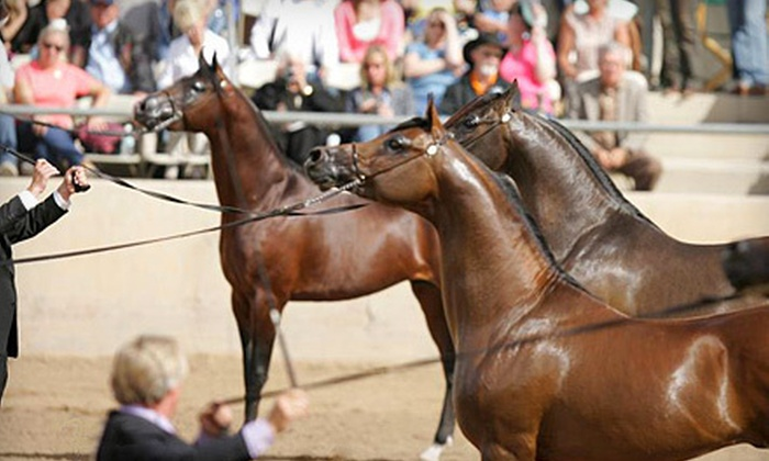 Scottsdale Arabian Horse Show - North Scottsdale: $10 for Two General-Admission Tickets to the Scottsdale Arabian Horse Show (Up to $20 Value)